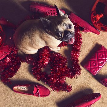 """""""A Pawfect Holiday"""" Par Tod's"""